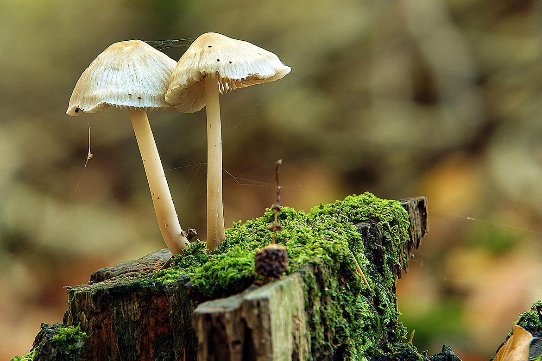 natuurfotografie, paddestoel